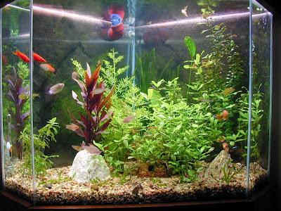 Peces primer acuario for Oxigeno de peceras