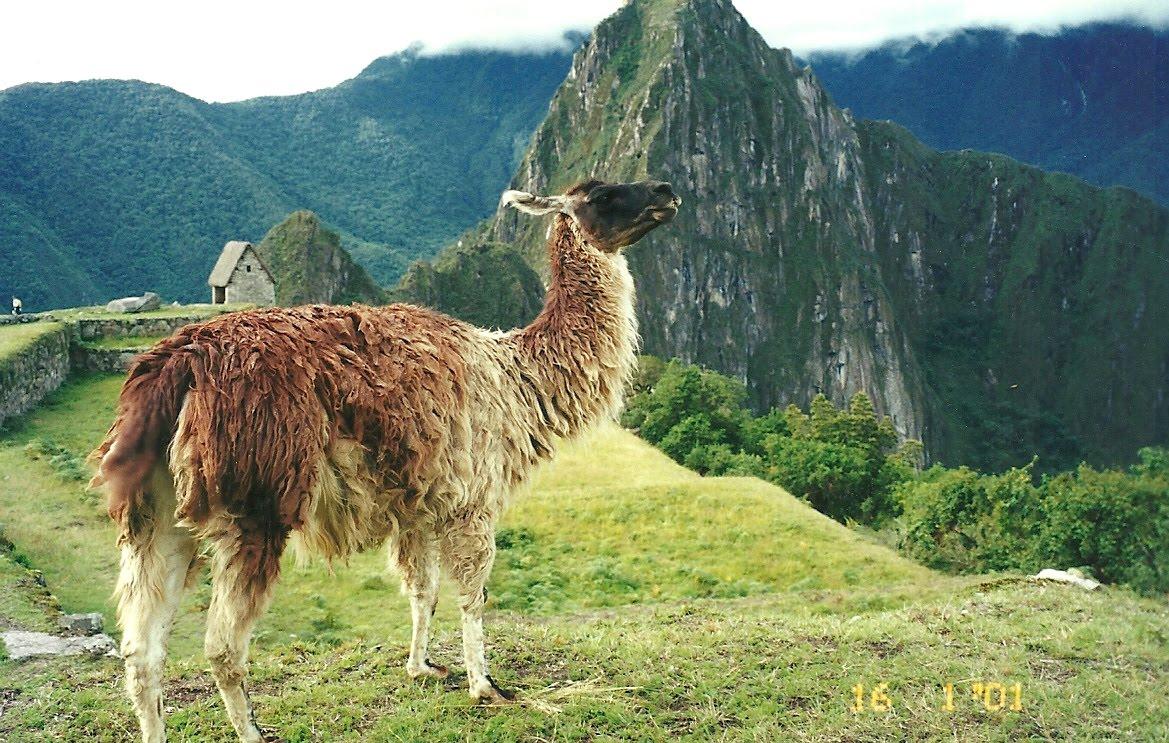 ALBÚM - MOMENTOS DE LUNA  Machu+Picchu+lhama
