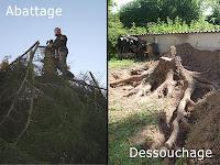 Abattage, Dessouchage