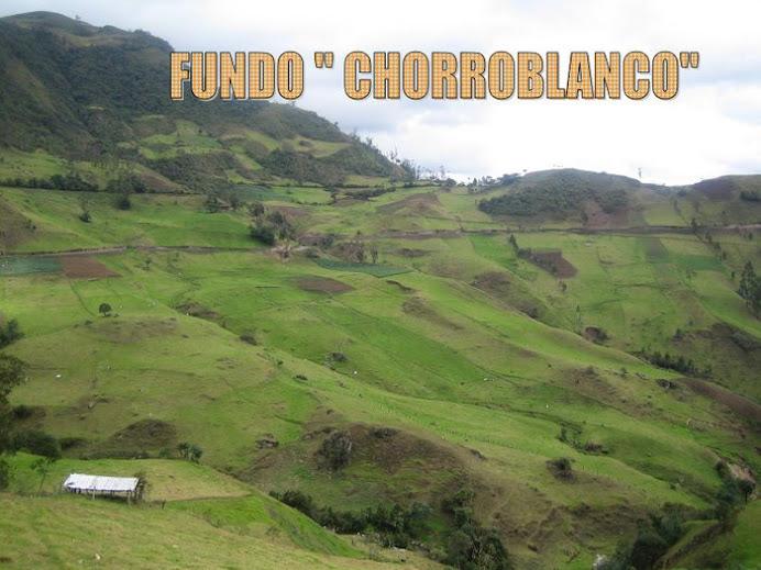 FUNDO CHORRO BLANCO