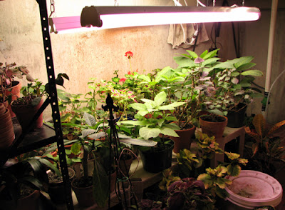 our little acre the greenhouse in my basement