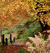 Autumn in Glencree