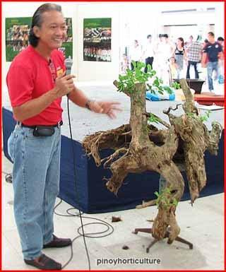 Romy Dino