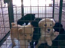 cachorritos adoptados