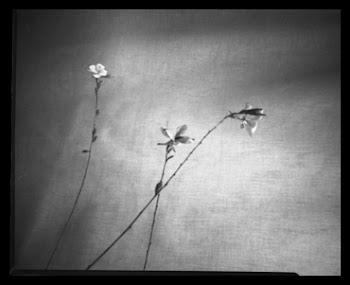 El silencio es la gran revelación -Lao-tse.