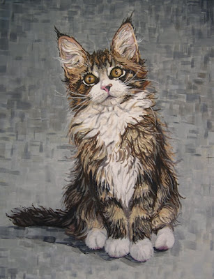 maine coon cat. maine coon cat. these maine