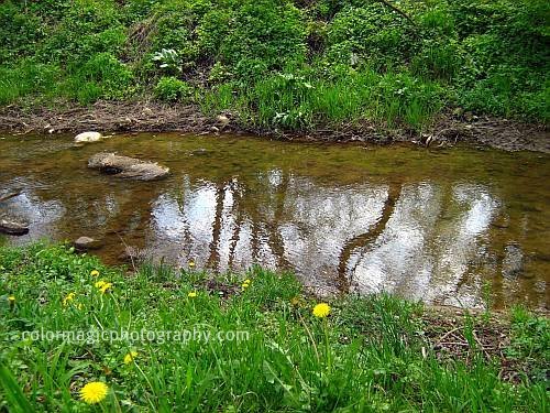 Reflection in the creek