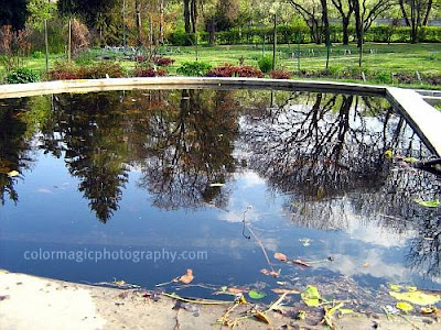 Trees reflection in pool
