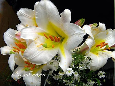 White regal lilies