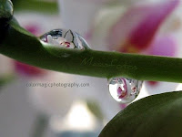 White orchid in raindrops