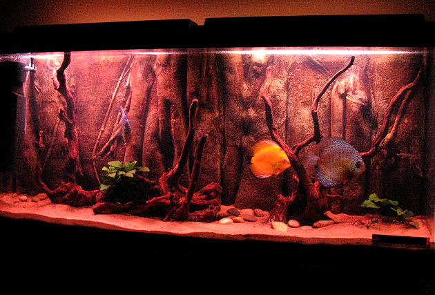 décor aquarium 3d
