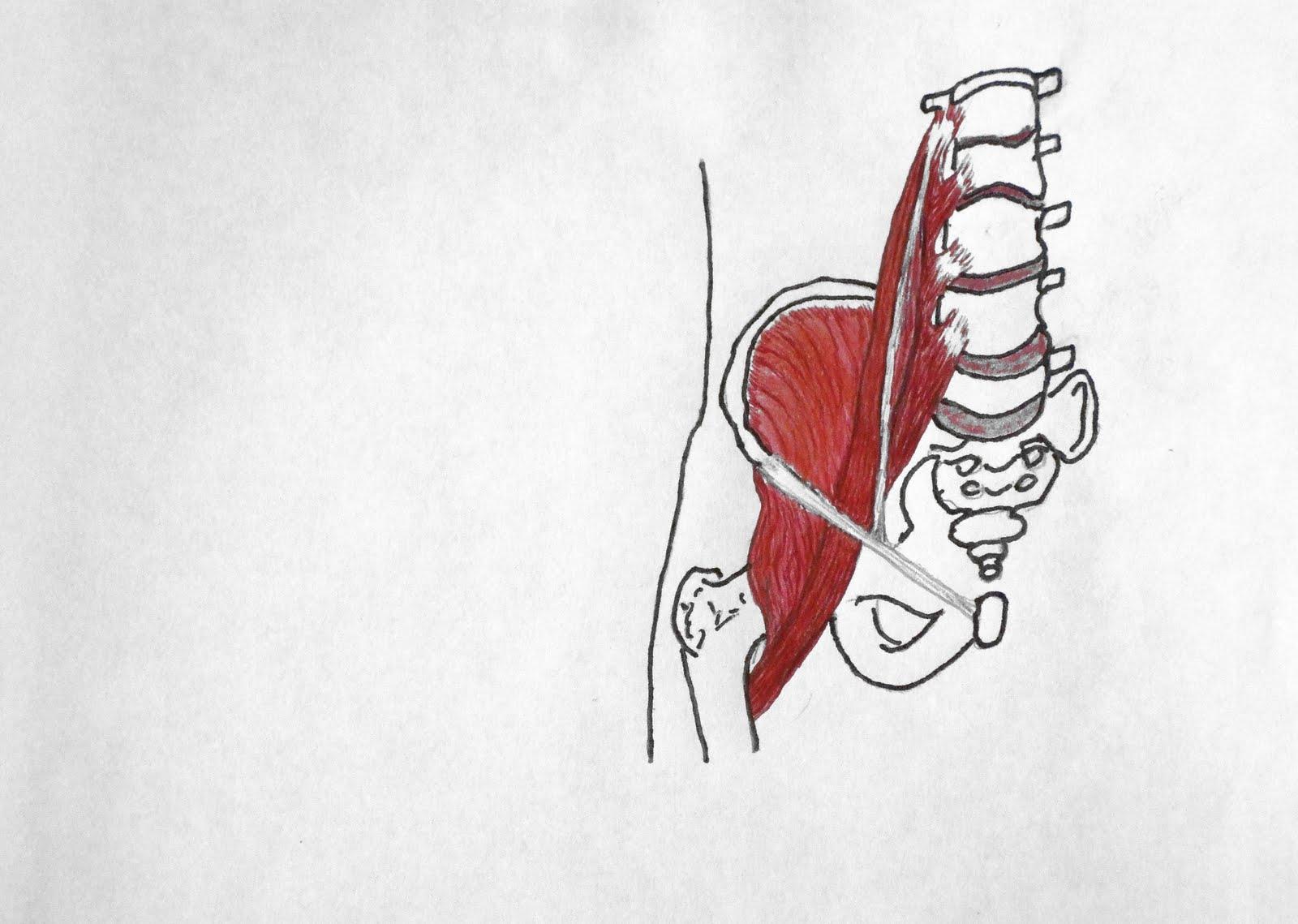 Healing Hands Bodywork: MAJOR MUSCLES CHART