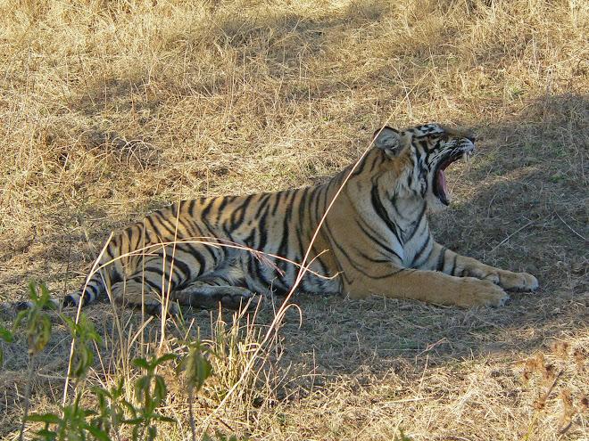 La faune Indienne Février 2008