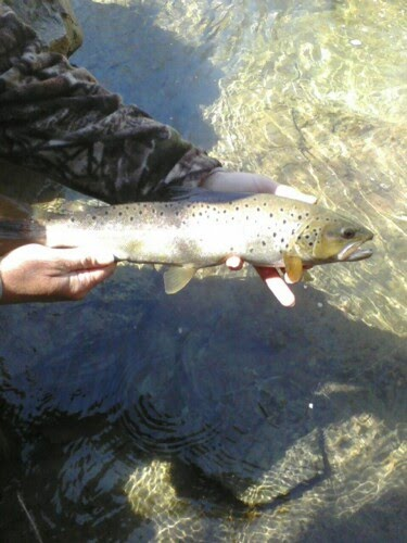 Vermont fly fishing a successful opening day for Vermont trout fishing