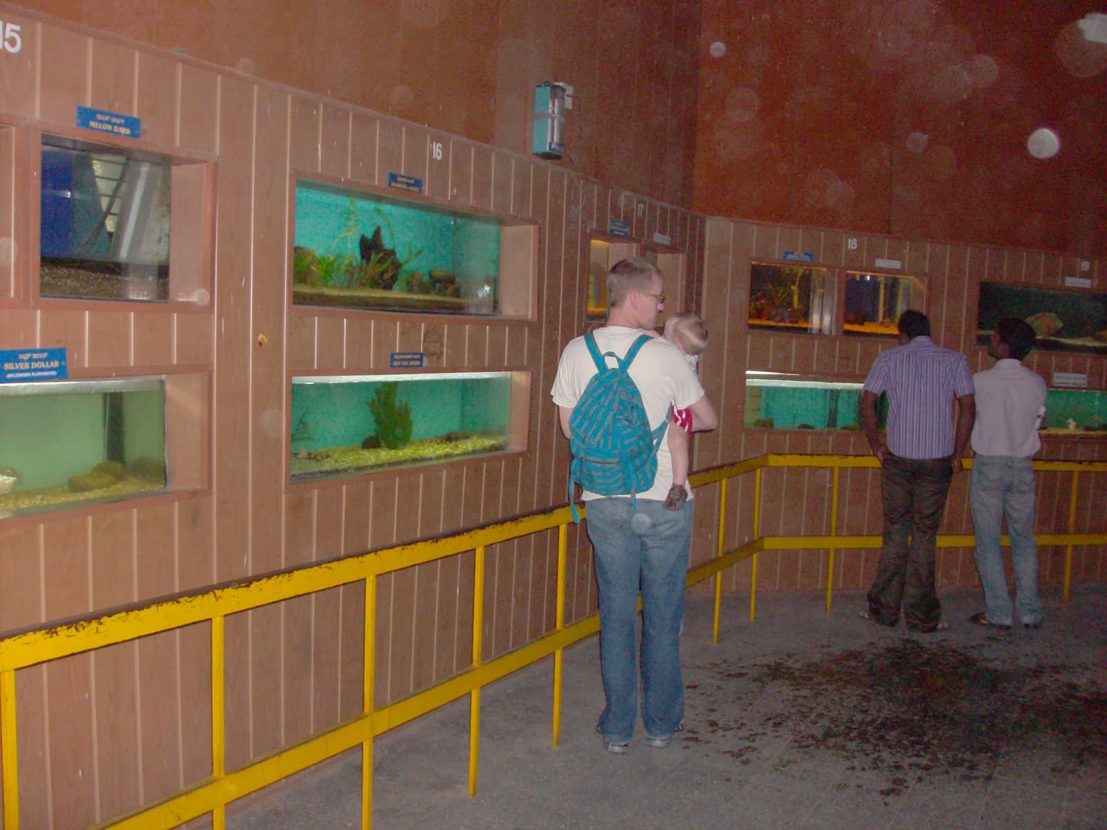Fish aquarium in bangalore - High Court Of Karnataka