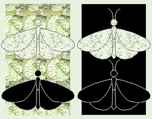 Peppered Moth Natural Selection Diagram