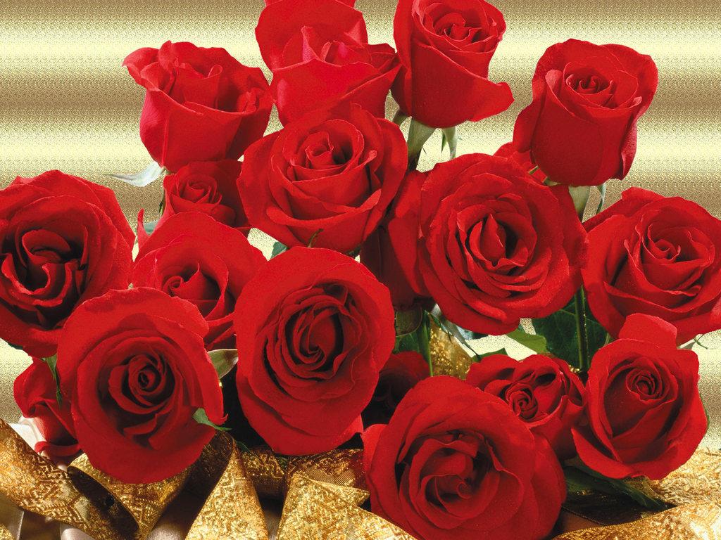 rosas no jardim poema: Pensamentos: Homenagem a Rosa ( irmã falecida) aniversário:10/09