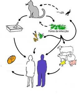 Fontes de infecção da toxoplasmose