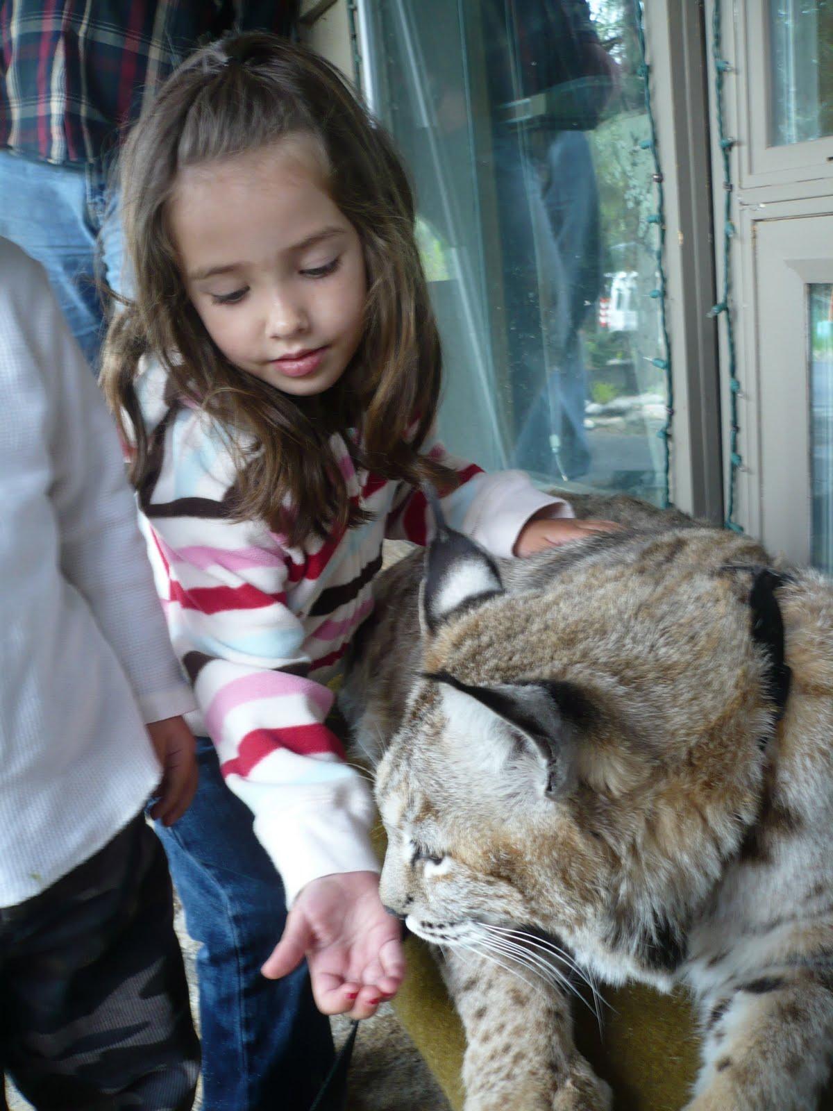 Bobcat pet - photo#7