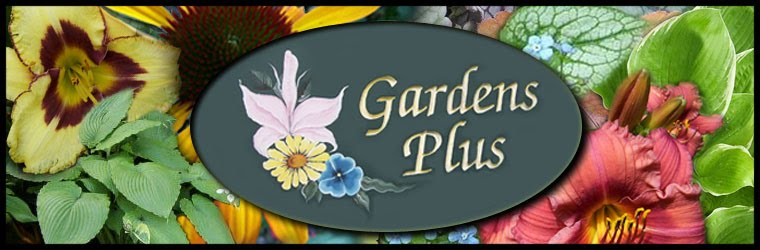 Gardens Plus all about Easy Care Perennials