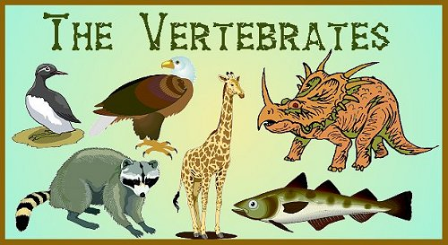 Kingdom Animalia Vertebrates
