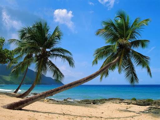Montego Bay Beach Village Goa
