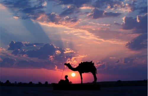 ظــلآآل camel.jpg