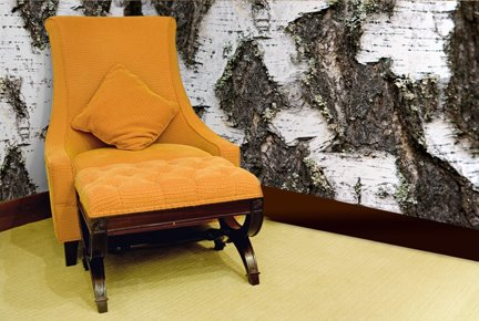 Wall Murals   Photo Murals  Tree Bark Wallpaper Mural