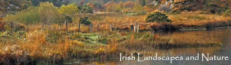 Irish Landscapes and Nature
