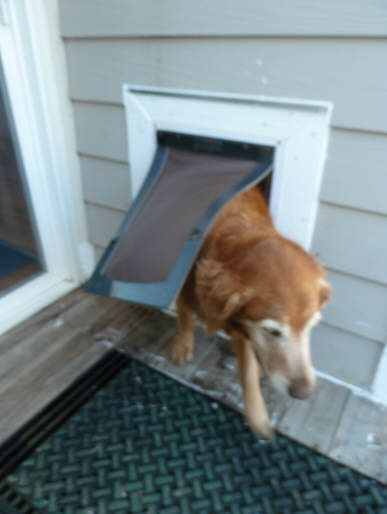 how to build a pet door
