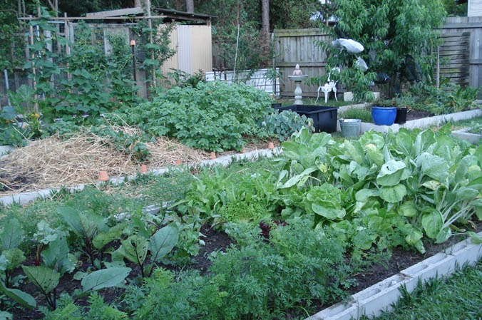 Down to earth starting your vegetable garden for Starting a vegetable garden