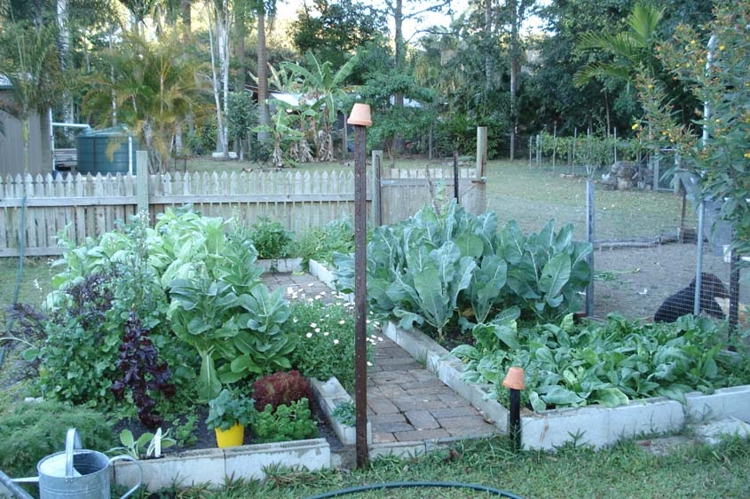 Down to earth starting a vegetable garden for Starting a vegetable garden