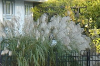 Ornamental grasses dutch touch landscape