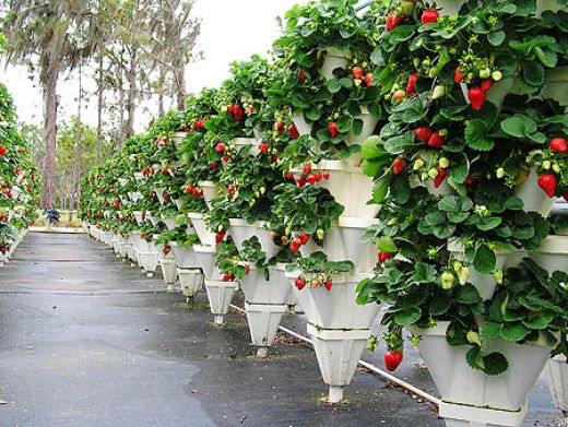 Dutch Touch Blog Stay informed Gardening Tips for