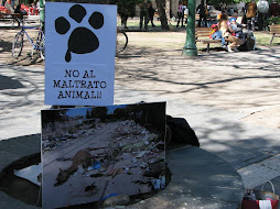 """NO AL MALTRATO ANIMAL"""