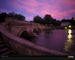 Purplewaves