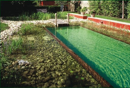 Natural Swimming Pools Images Frompo