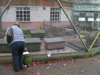 feeding the invisible rabbit in the animal cage, victoria park portsmouth