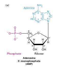 Dna blog april 2010 sama halnya seperti dna rna terdiri dari 3 5 ikatan fosfodiester tetapi ikatan fosfodiester ini kurang stabil dibandingkan dna karena secara tidak ccuart Images