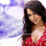 Actress Sameera Reddy Wallpapers - High Quality