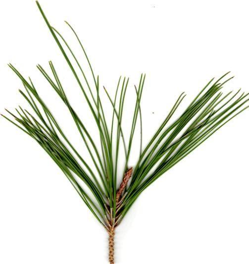Producci n de plantas de vivero conociendo las plantas for Produccion de plantas en vivero pdf