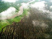 Manfaat Sosial dan Finansial Greenpeace Indonesia Gagal