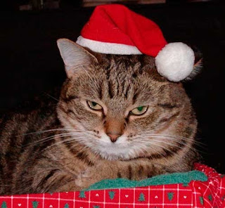 Santa Hat Kitty Cat Christmas Photo
