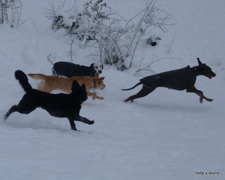 In Deutschland gibt es wieder Wölfe...