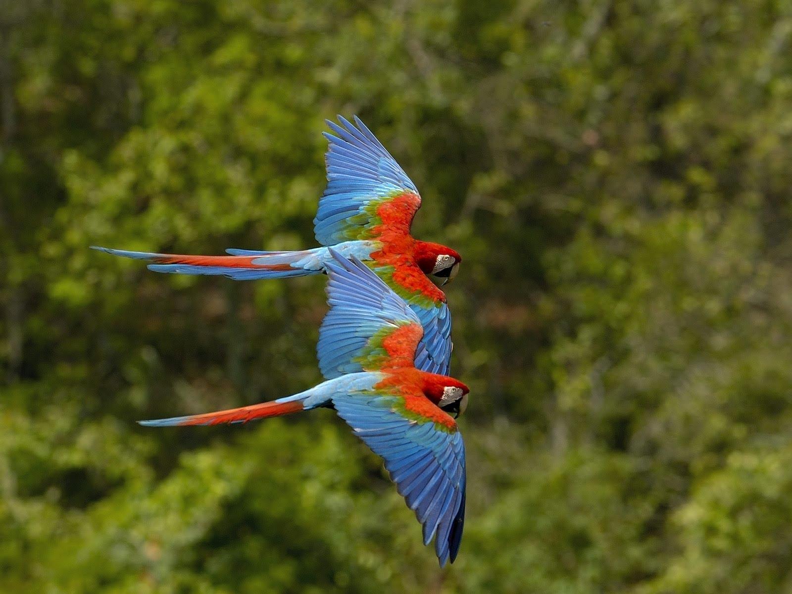 http://1.bp.blogspot.com/_85h0rx9KpUw/TAYUTF5MOWI/AAAAAAAACJM/6ObwQaXd6-s/s1600/009_Baby_Birds_DGN.jpg