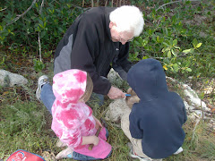 Grandpa helped open the coconut, and find the pretty shells embedded  in the rough coral.