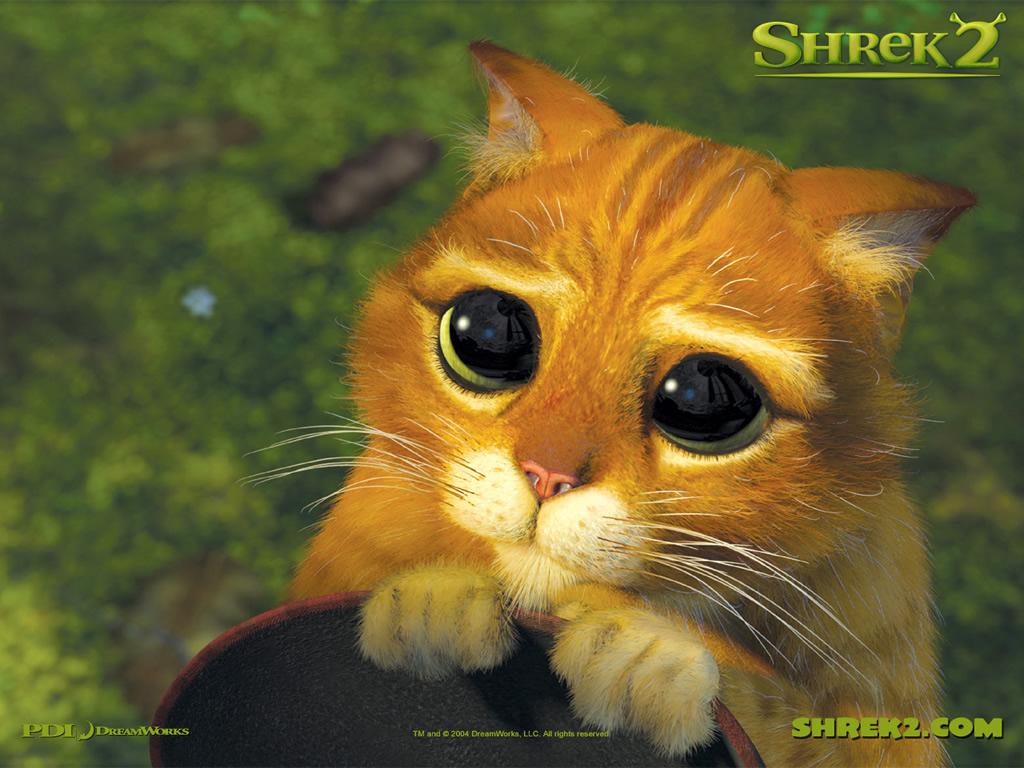 shrek cat