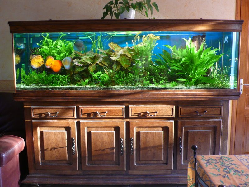 produits anti algues engrais pour aquarium conditionneur eau pour aquariums engrais maison aqua mio. Black Bedroom Furniture Sets. Home Design Ideas