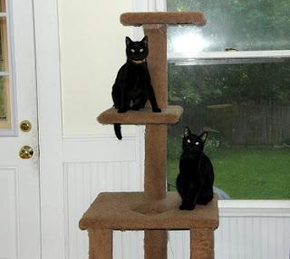 C mo hacer un rbol para gatos en sencillos pasos - Casas para gatos de madera ...
