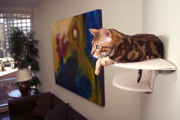 The refined feline gatos felices decoraci n perfecta - Estanterias para gatos ...